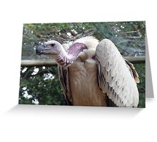 scavenger - Vulture, South Africa Greeting Card