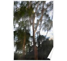 Blurred Tree - Lane Cove National Park Poster