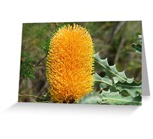 Ashby's banksia Greeting Card