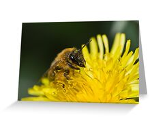 Bee Covered in Pollen Greeting Card