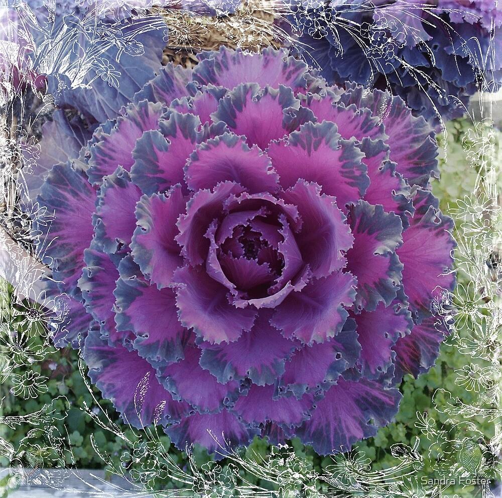 Purple Ornamental Cabbage by Sandra Foster