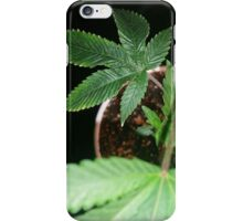 Fresh potted  iPhone Case/Skin