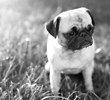 Sad Sunset Pug by Stephanie Sherman