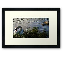 Cautious Beauty  Framed Print