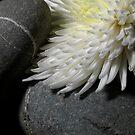 Soft Granite by KitPhoto