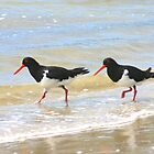 Pied Oyster Catchers by Christine Beswick