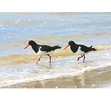 Pied Oyster Catchers Photographic Print
