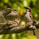 House sparrows - Now children behave!! by Jon Lees