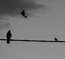 Birdly Omens by fertorgrefee