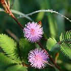Flower2 by Philip Alexander