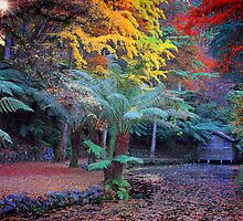 Autumn in the Dandenongs by sally williams
