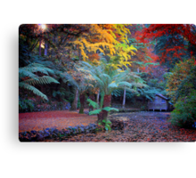 Autumn in the Dandenongs Canvas Print