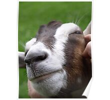 Goat - St Werburghs City Farm - No2 Poster
