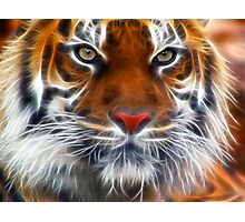 Lord of the Indian Jungles Photographic Print