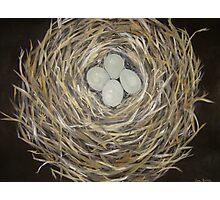 """Nest Egg"" Photographic Print"