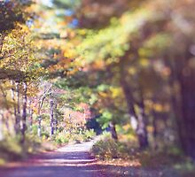 Wooded road in Autumn by Erika Lafrennie