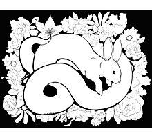 Rabbit Scent Photographic Print