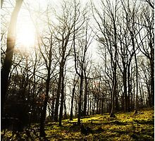 Sunlight Through the Woods. by owxndxsigns