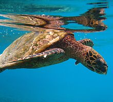 Sea tortoise by Marieseyes