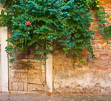 Door with Vine by Christine Wilson