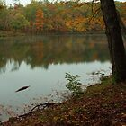 Cumberland Mountain State Park  by kathy s gillentine