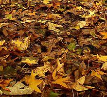 Perfectly Fall by Charlie Zielinski