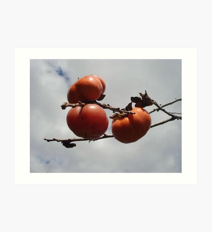 Japanese Persimmons Art Print