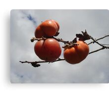 Japanese Persimmons Canvas Print