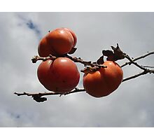 Japanese Persimmons Photographic Print