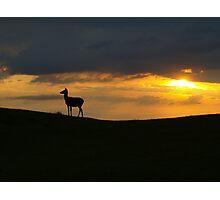 Deer: Broadway Tower Photographic Print