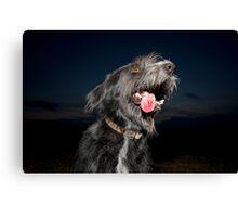 Shaggy dog at night Canvas Print