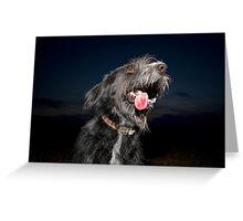 Shaggy dog at night Greeting Card