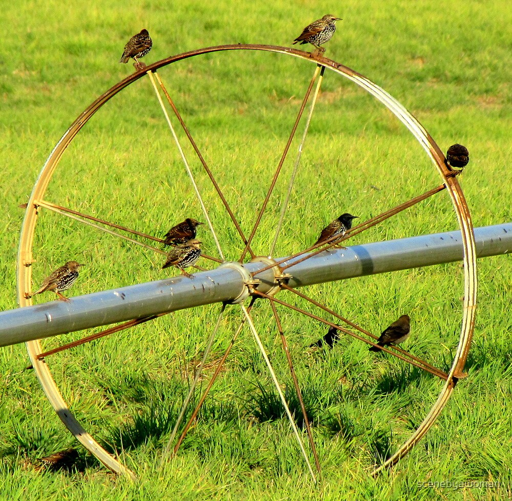 Birds On A Wheel by scenebyawoman