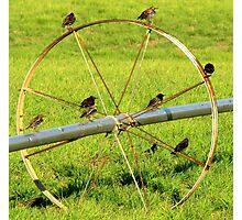 Birds On A Wheel Photographic Print