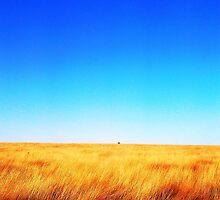 Field by razberryjam