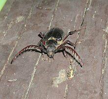 Beetle Juice by Dixie Duncan