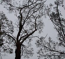 tree almost in silloutte by aussieazsx
