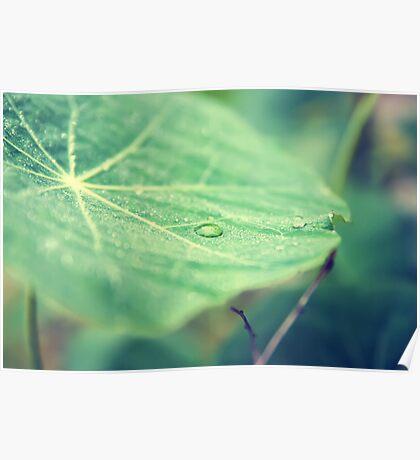 Dew on a leaf Poster