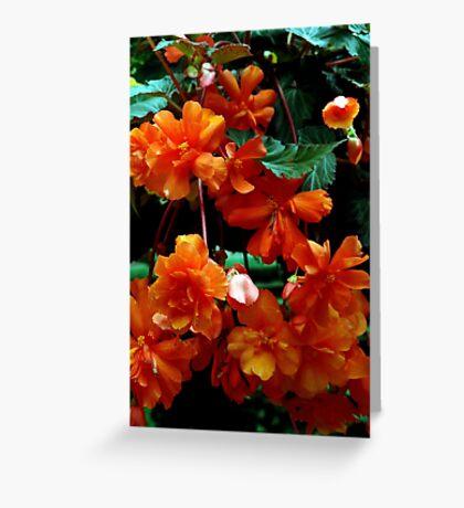 Begonia Cluster Greeting Card