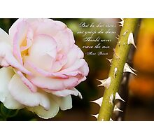 Craving The Rose Photographic Print