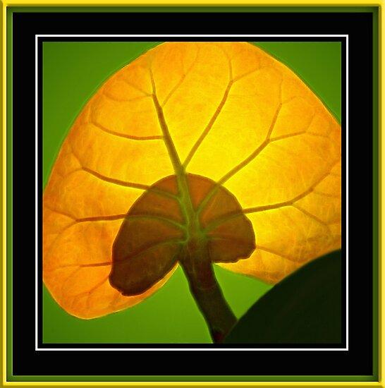 Beach Grape Leaf by glink