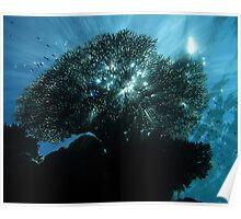 Inner Lagoon Poster