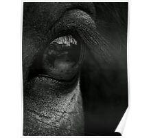 Pony Eye Black & White Poster