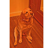 Wondering Dog Photographic Print