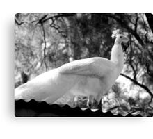 Albino Peacock Delivers Inspirational Speech From Atop Mount Corrugate Canvas Print