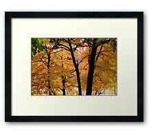 Seeing more fall Framed Print