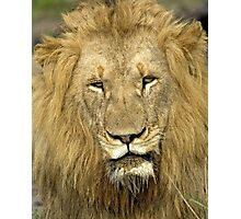 Close Up Lion Photographic Print