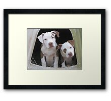 Did You Say Cookie? Framed Print