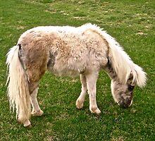 Shaggy Mini Horse by Shulie1