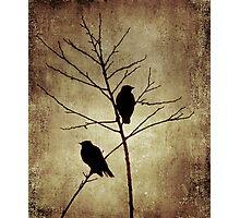enter the dusk Photographic Print